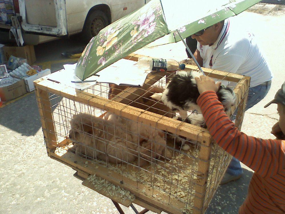 Avantaje si dezavantaje in a avea un caine ca animal de casa. Pisica, peste, hamster, papagal (div5) (3/3)
