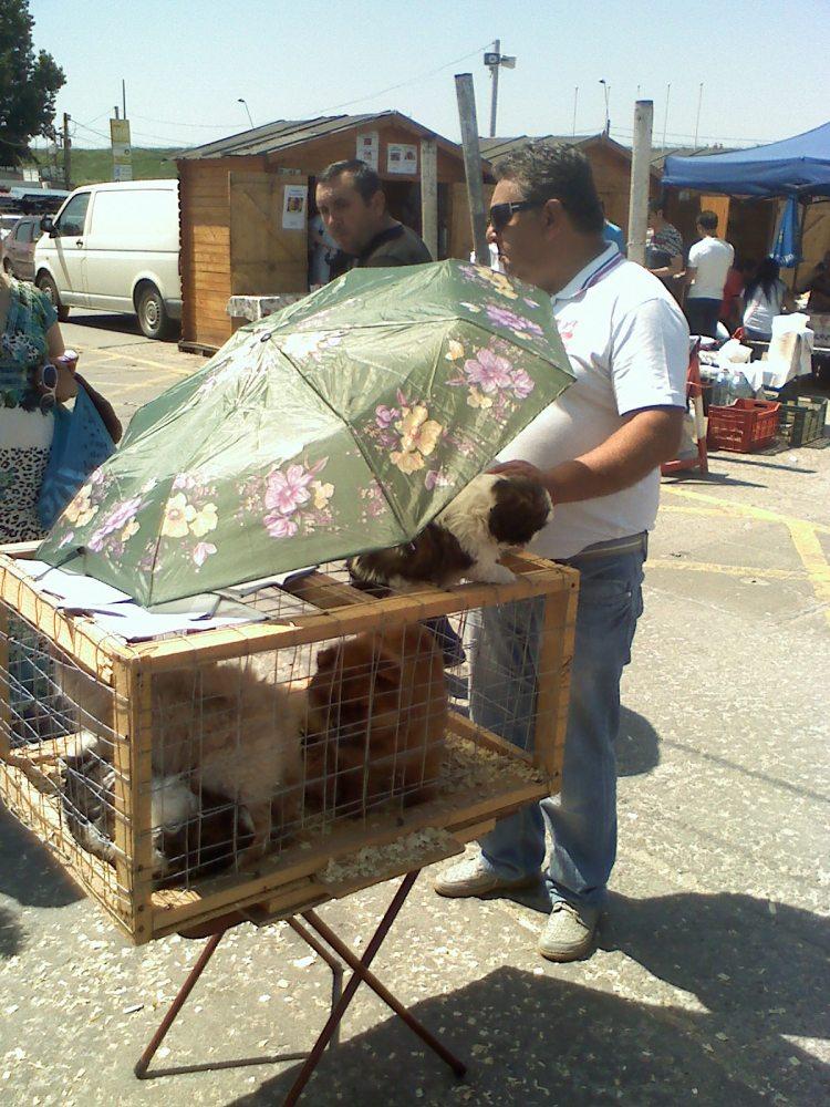 Avantaje si dezavantaje in a avea un caine ca animal de casa. Pisica, peste, hamster, papagal (div5) (2/3)