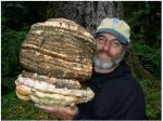 magical mushrooms 6 moduri prin care ciupercile pot salva lumea, avantajele fungilor, proprietati miceliu,Paul Stamets, ceicunoi.wordpress.com