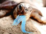 broasca testoasa mananca plastic nu folositi sacose de plastic video viata unei pungi de plastic poluarea mediului materiale nebiodegradabile, poluarea oceanelor, circuitul plasticului in natura, ceicunoi