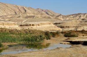 pilda invatatura tanar gaseste apa in desert ofera batran recunostinta intelepciune piele