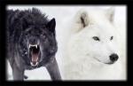 pilda morala invatatura ce este sufletul omului lupul alb negru