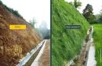 tehnologie inovatie plante radacini adanci prati armati pentru fixarea solului impotriva eroziunii terenurilor degradate, poluate, desertificare, plantare puieti pentru inundatii, alunecari de teren 10