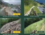 tehnologie inovatie plante radacini adanci prati armati pentru fixarea solului impotriva eroziunii terenurilor degradate, poluate, desertificare, plantare puieti pentru inundatii, alunecari de teren 8