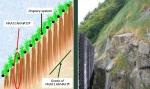 tehnologie inovatie plante radacini adanci prati armati pentru fixarea solului impotriva eroziunii terenurilor degradate, poluate, desertificare, plantare puieti pentru inundatii, alunecari de teren 4