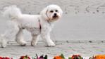 ce amenzi risca stapanii posesorii de animale caini in public lesa botnita spatii special amenajate comportament decent trebuie sa aduni mizeria rahatul caca de caine