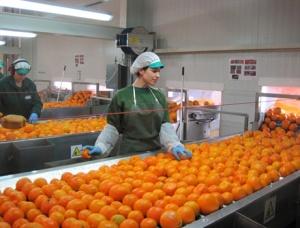 industria alimentara pericolele mancarii alimentelor procesate sucuri naturale portocale substante toxice periculoase nocive chimicale e-uri aditivi alimentari, conservanti