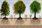Lumea plantelor, comunicare specii vegetale natura - studii interesante despre plante viata salbatica biologie, chimie, ecologie, mecanisme colaborare aparare in salbaticie mediu natural rizosfera