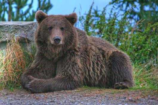 Video amuzant funny - URSI scarpinandu-se de copac in salbaticie. Sa ne destindem putin urs carpatin fauna turism ecologie Romania protectia naturii mediului echilibru ecosistem specii rare padure