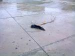 8 poze imagini foto furtuna ploaie vijelie Bucuresti umbrele rupte aruncate peste tot pe jos strada despre societatea romaneasca comportamentul romanilor in prezent lipsa bun simt gunoaie aruncate