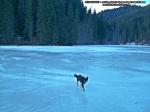 41 poze foto imagini lacu rosu bicaz chei inghetat iarna ianuarie 2014 oameni care merg pe apa lacului lac gheata cu patine de gheata pe lac inghetat natural strat gheata zapada munte judetul neamt