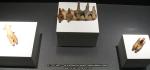 41 poze imagini foto muzeul istorie arheologie arta cultura civilizatia cucuteni piatra neamt istoria milenara a romaniei artefacte vase ceramice figurine obiecte ceramica de cucuteni arta eneolitica