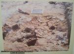 58 poze imagini foto muzeul istorie arheologie arta cultura civilizatia pre cucuteni piatra neamt sapaturi arheologice santier artefacte vechi restaurare modelare vase ceramice obiecte antice Romania