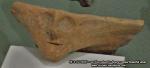 80 poze imagini foto muzeul istorie arheologie arta cultura civilizatia pre cucuteni piatra neamt istoria milenara a romaniei artefacte vase ceramice figurine obiecte ceramica cucuteni arta eneolitica