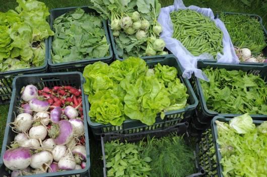 Parteneriatele ASAT Romania Asociatia pentru Sustinerea Agriculturii Taranesti hrana sanatoasa mici producatori romani legume direct la consumatori locali. Sustineti taranii si micii fermieri bio Boicotati supermarket urile 22