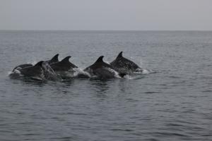 asociatia ecologista ong mare nostrum constanta protectia mediului litoral marea neagra delfini reciclare deseuri ulei uzat tarm curat apa nepoluata pesticide ziua marii negre viata marina 3