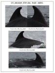 asociatia ecologista ong mare nostrum constanta protectia mediului litoral marea neagra delfini reciclare deseuri ulei uzat tarm curat apa nepoluata pesticide ziua marii negre viata marina 10