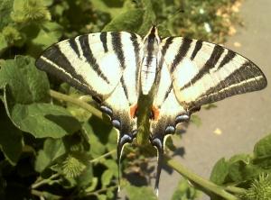 poze imagini fluture frumos in bucuresti pe flori plante verzi ce mi s-a intamplat azi colectie de povestiri, intamplari educative - chestiute din viata unui roman bucurestean din Romania