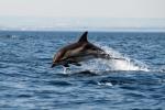 program proiect campania adopta un delfin din marea neagra litoral constanta asociatie mediu ong mare nostrum protectia mediului ape curate nepoluate viata salbatica marina informatii viata delfinilor 8