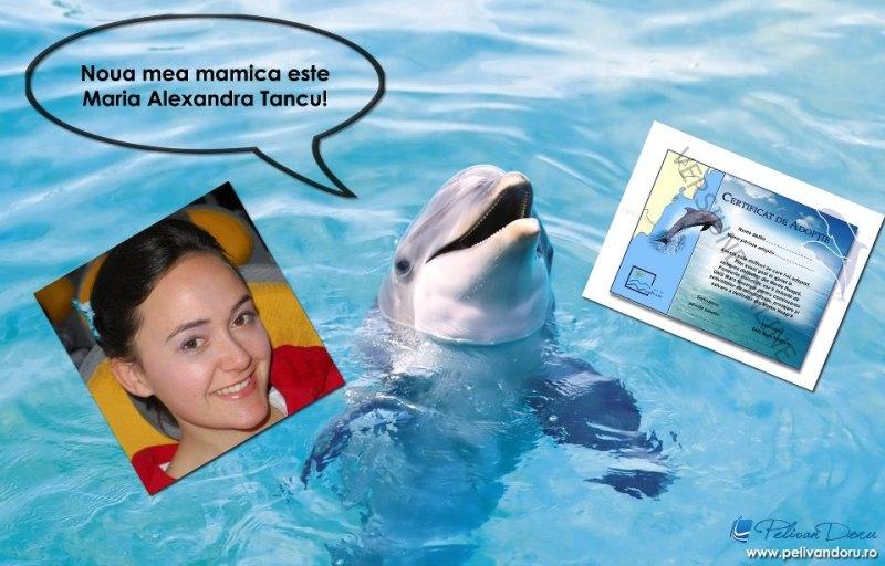 programul proiectul adopta un delfin sustii biodiversitatea protectia mediului in zona costiera a marii negre platesti 100 lei certificat adoptie poze informatii delfini localizare plase pescuit dispozitiv