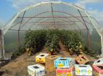 solarii solar sera sere legume fructe flori plantare cultivare rasaduri gradina camp incalzite iluminat artificial tunel hrana sanatoasa din piata nu supermarket rosii castraveti salata vinete dovlecei 4