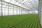 solarii solar sera sere legume fructe flori plantare cultivare rasaduri gradina camp incalzite iluminat artificial tunel hrana sanatoasa din piata nu supermarket rosii castraveti salata vinete dovlecei 5