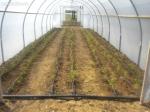 solarii solar sera sere legume fructe flori plantare cultivare rasaduri gradina camp incalzite iluminat artificial tunel hrana sanatoasa din piata nu supermarket rosii castraveti salata vinete dovlecei 7