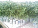 solarii solar sera sere legume fructe flori plantare cultivare rasaduri gradina camp incalzite iluminat artificial tunel hrana sanatoasa din piata nu supermarket rosii castraveti salata vinete dovlecei 10