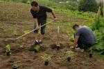 Asociatia Ecoruralis colecteaza seminte traditionale din toata tara pentru salvarea soiurilor de legume româneşti 3