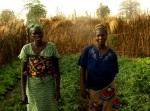 tarani senegal rosii romanesti in africa Asociatia Ecoruralis colecteaza seminte traditionale din toata tara pentru salvarea soiurilor de legume româneşti