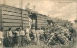 Exportul de banane din țările producătoare are o istorie îndelungată