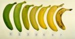 Nivele de coacere artificiala banane asigurate în camerele de gazare etilena - supermarketurile mentioneaza cat de coapte vor bananele de la 1 la 7