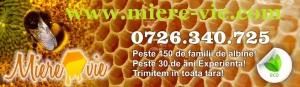 site miere-vie.com miere 100% naturala curata direct de la producator roman  capaceala tei salcam rapita floarea soarelui